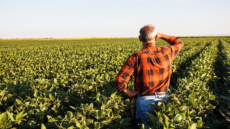 Farmer Surveying Field