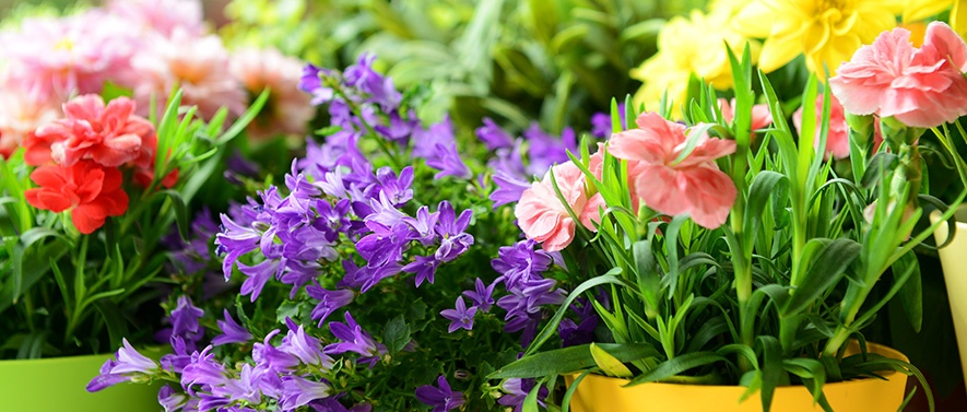 mothersdayflowers_ac2018.jpg