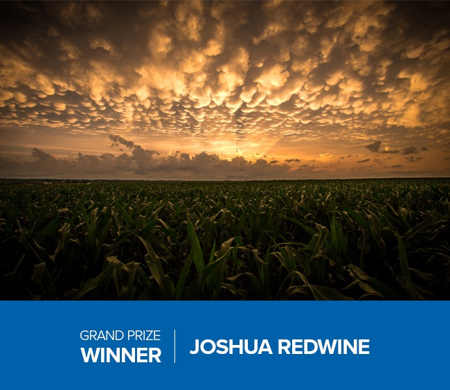 Redwine-Winner